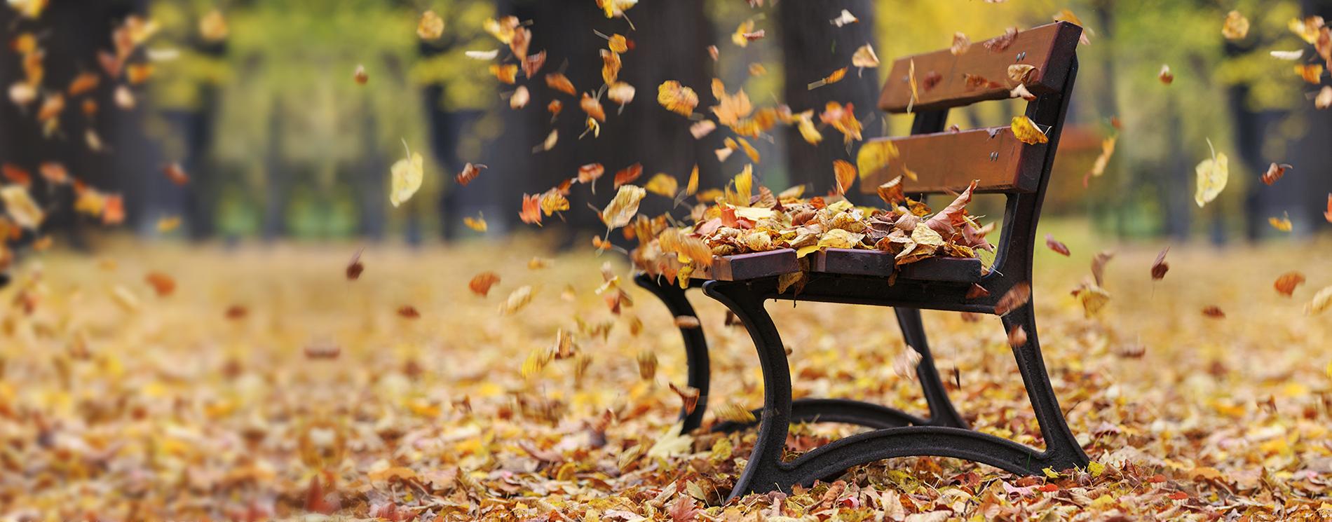 Rendez-vous en automne